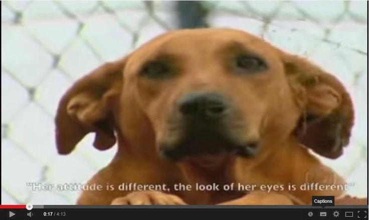 Lilica หมาที่มีจิตใจดีกว่ามนุษย์บางตัว