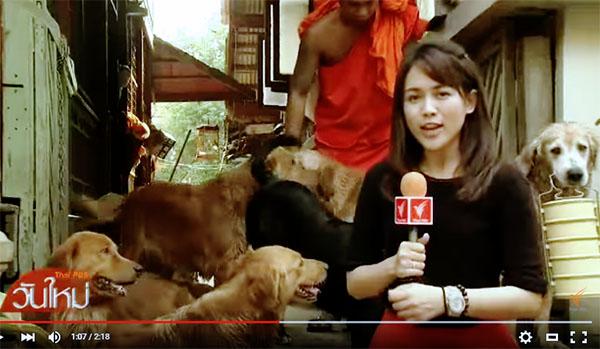 สุนัขช่วยเหลือภารกิจวัดใหญ่สว่างอารมณ์ จ.นนทบุรี