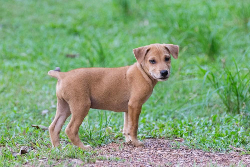 โลกของหมาตัวน้อยแม้เป็นหมายังมีบุญ